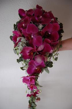 orchidebrud2