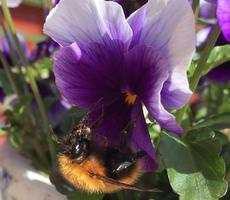 I en blomst på Dønna