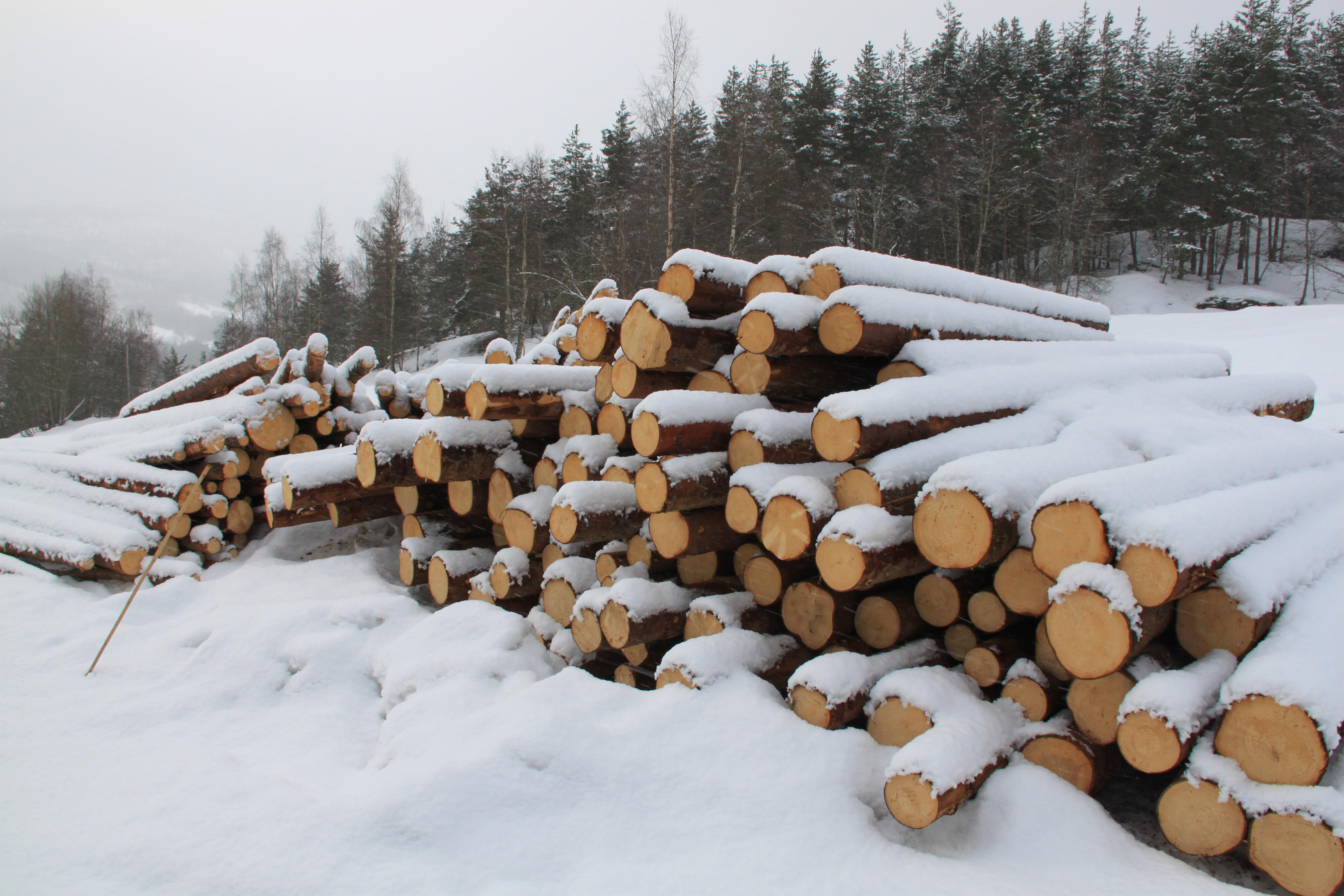 Tømmerstokkar.jpg