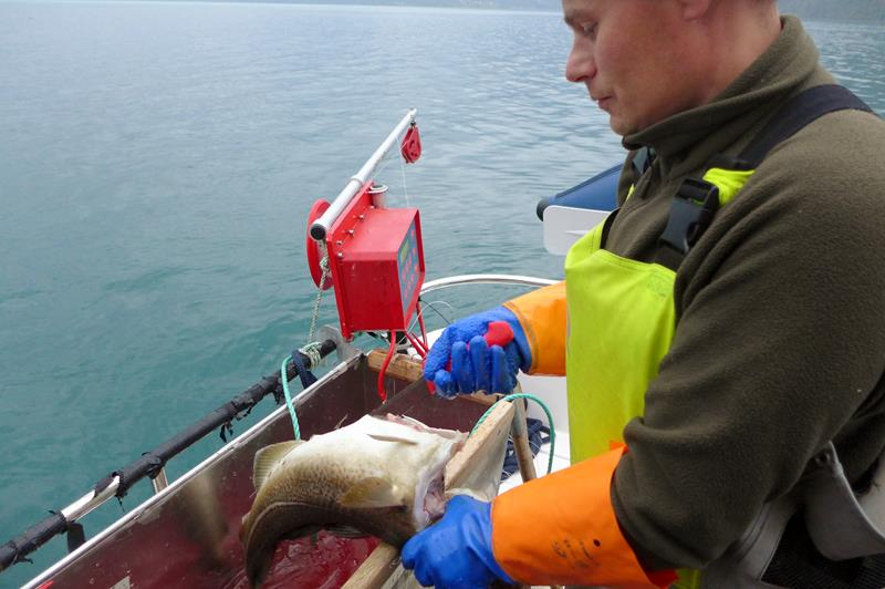 Kjetil A fishermans workday.jpeg