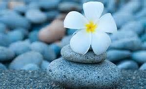 Blomst på stein