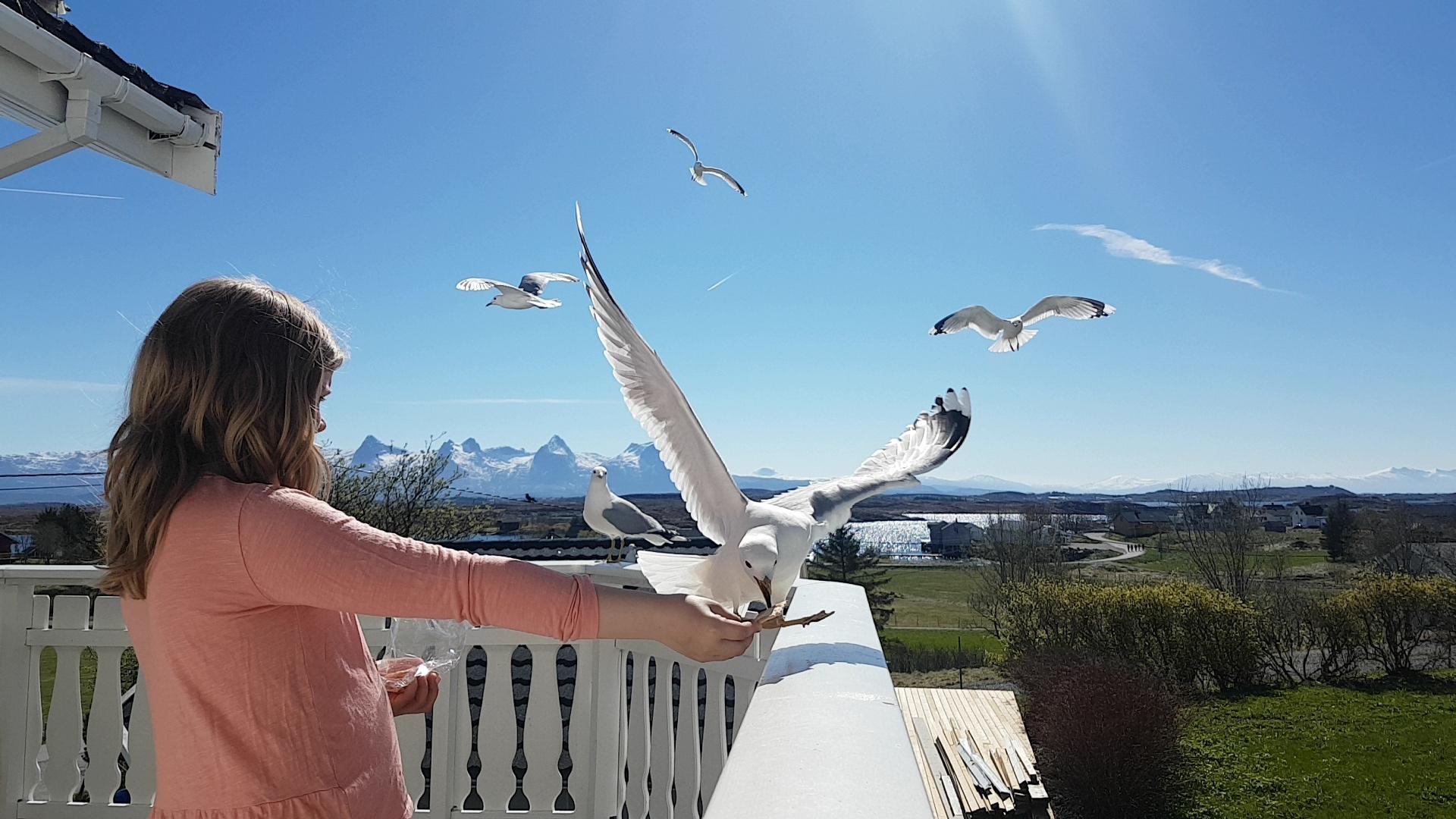 Charlotte Jakobsen_Mater måsene på Seløy