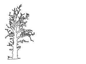 Bildet viser et svarthvitt omriss av et tre