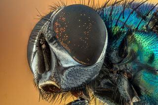 Bildet viser et insekt