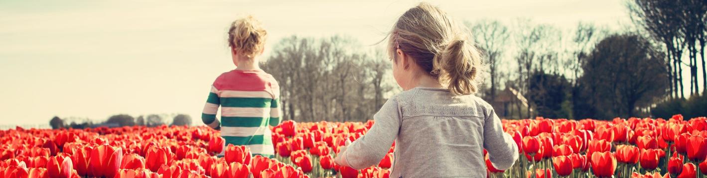 Banner Barn i tulipanåker