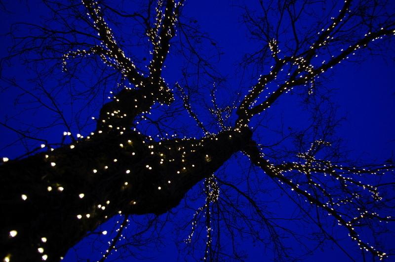 Tre med julelys utenfor rådhuset