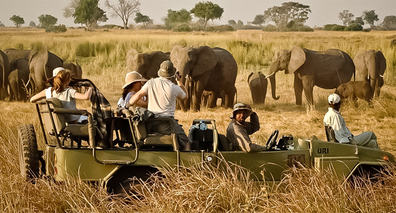 BOTSWANA Elefanter 730