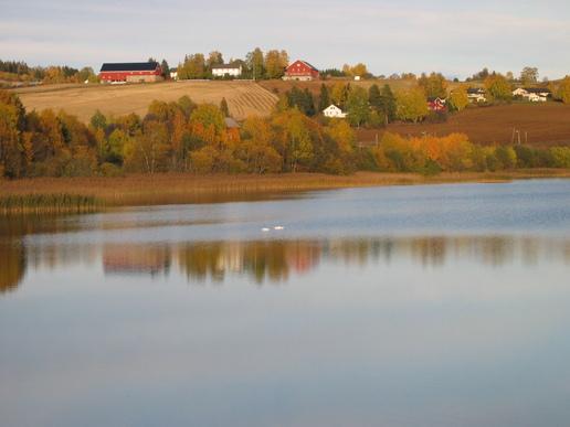 Vassjø på Grindvoll som antagelig er Norges største kransalgesjø
