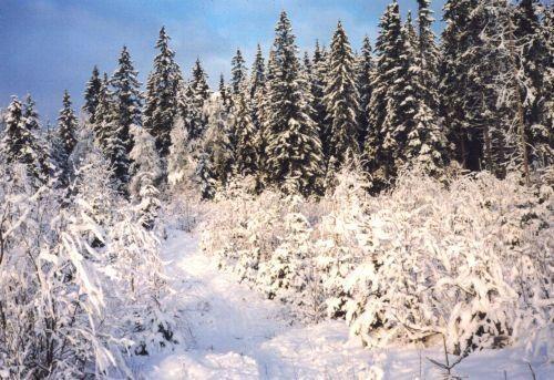Store rommet vinter