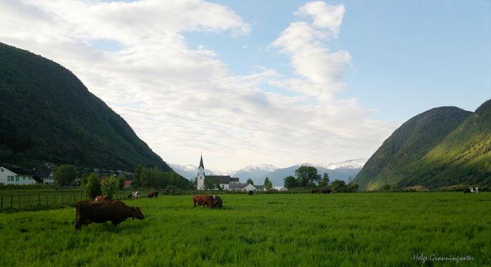 Kirke og kyr i Vik 2014-05-19-904 bilete