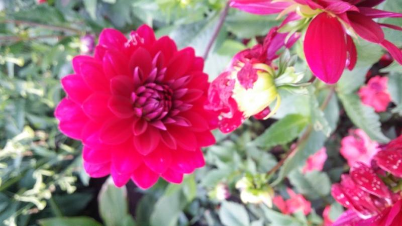 Fantastisk blomsterprakt i NMBU-parken.jpg