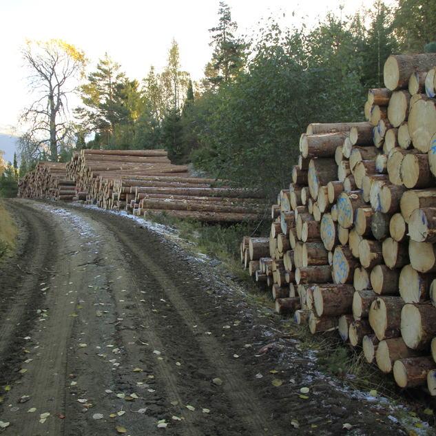 Feios skogsveg tømmerlager