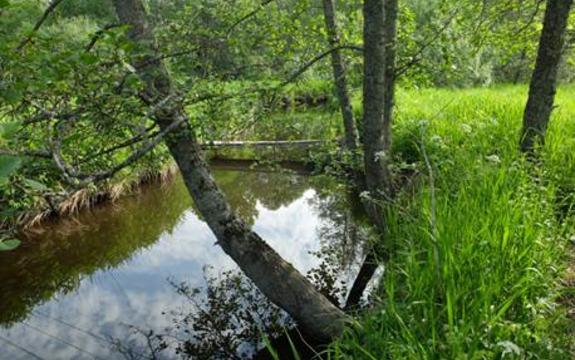 Dalsbekken i Slorene naturvernområde. Området forvaltes av Oppegård, Ski og Ås kommuner. Foto: Ane Tingstad Grav