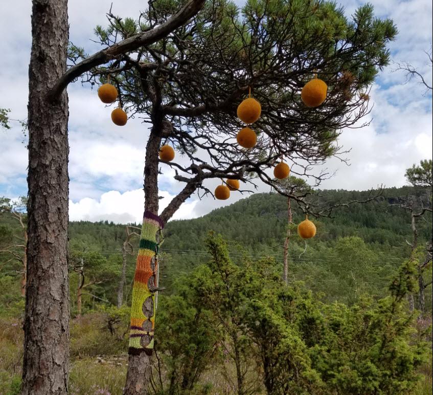 Appelsintre.jpg