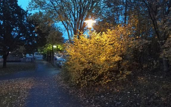 Gatelys, veilys, vei, mørkt 8 Foto Ellen Margrete Ceeberg