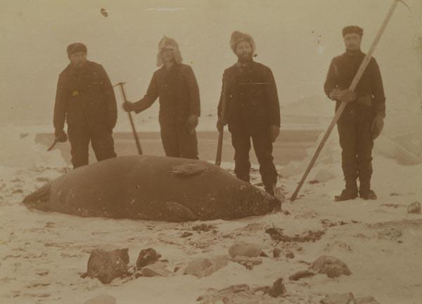 Foredrag Svalbard Museum.jpg