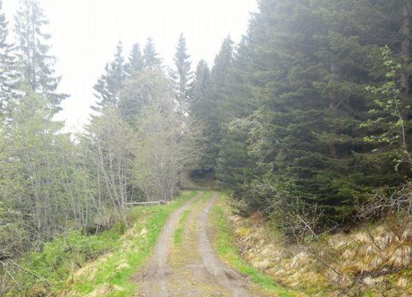skogsveg