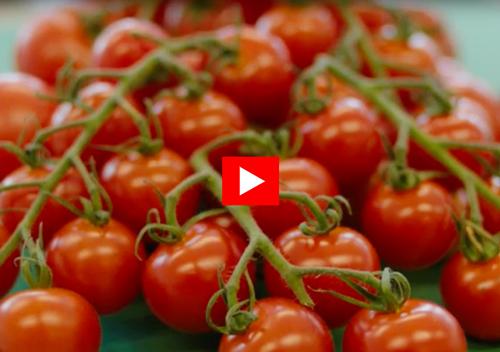 Tomater-pil500.jpg