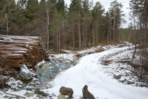 Skogsveg og tømmer