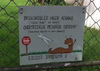 Brun Snegler