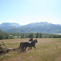 Slåttonn med to hester som drar slåmaskin. Utsikt over Kvennes