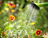 Vanne blomster med vannkanne