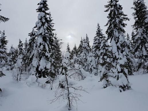 Bilde av skog i vinterdarkt