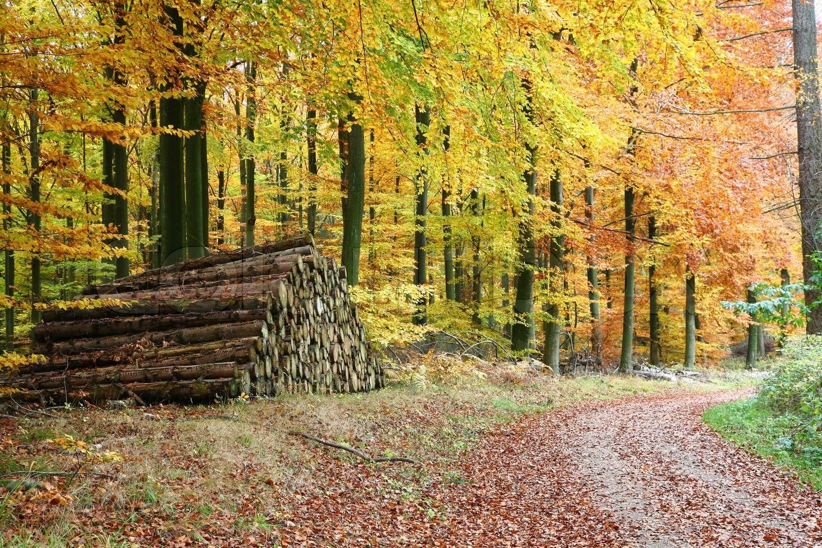 1600px Trær