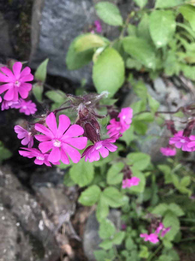 Blom Stigen