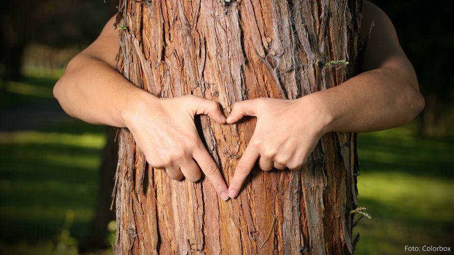 Bryr-oss-om-skogen