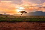 Savannen i solnedgang