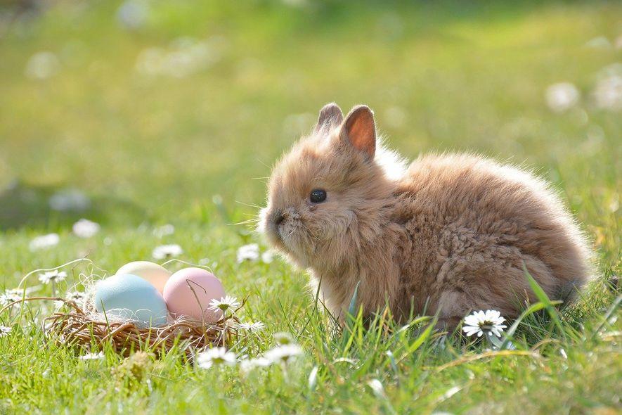 Påskehare og malte egg i gresset