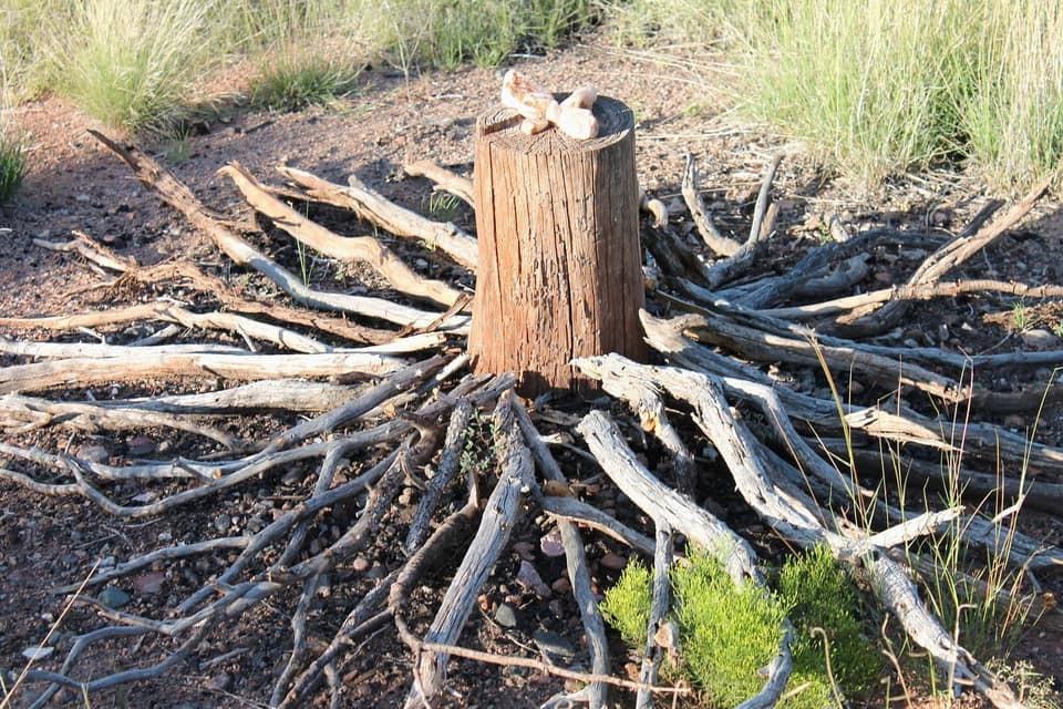 Bilde av en stubbe i skogen med mønster av steiner oppå