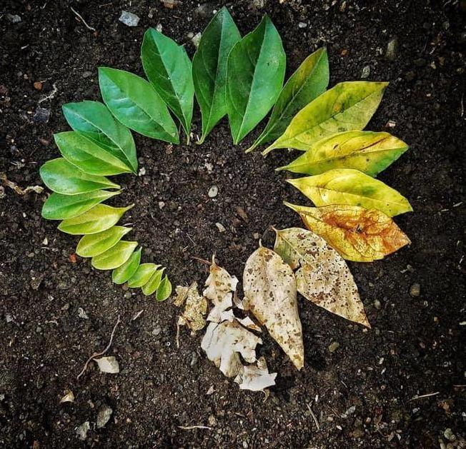 Fotografi av blader som er lagt ut i et mønster på bakken