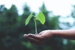 Regjeringen understreker at kommuner og fylkeskommuner er viktige aktører for å realisere FNs bærekraftsmål, fordi de er nærmest befolkningen, lokale bedrifter og organisasjoner. Foto: Akil Mazumder / Pexels