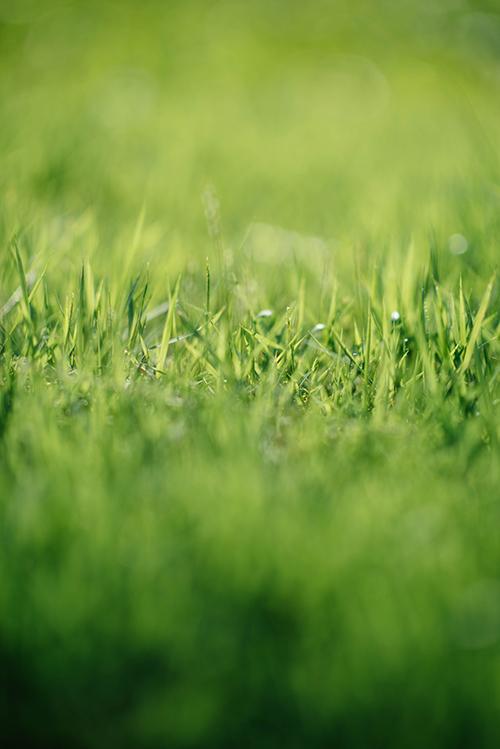 Grønt gress