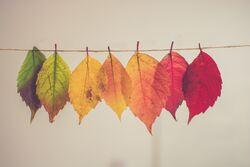 blader fra trærne i ulike farger på en snor