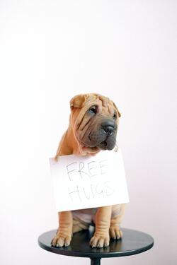 Trist hund med skilt rundt halsen der det står free hugs