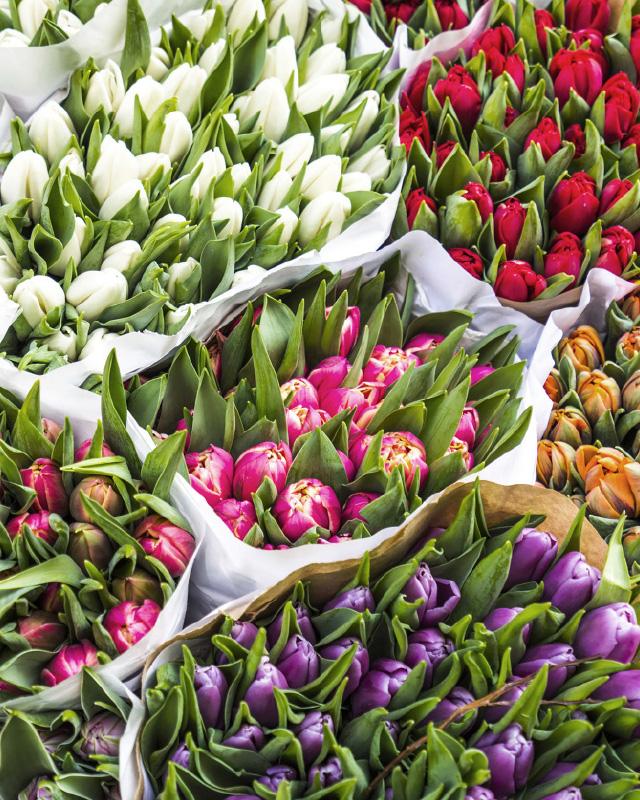 Fargerik-tulipanbukett.jpg