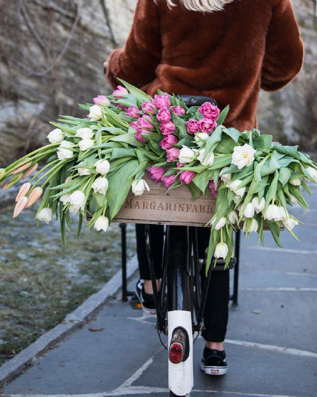 Sykkel-lastet-med-tulipaner.jpg