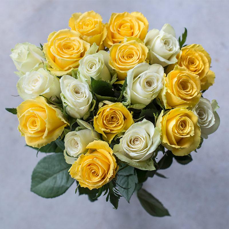 festroser-gule-rosegaranti.jpg
