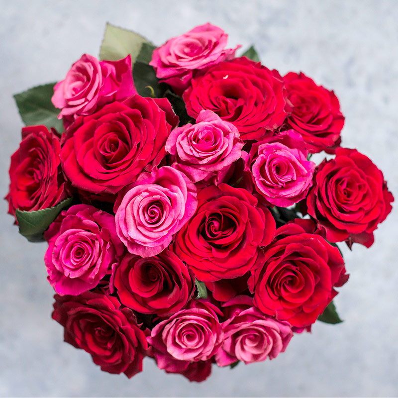 festroser-rode-rosegaranti.jpg