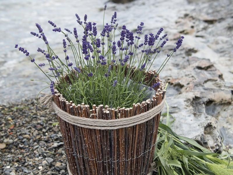 floriss-lavendel-botte.jpg