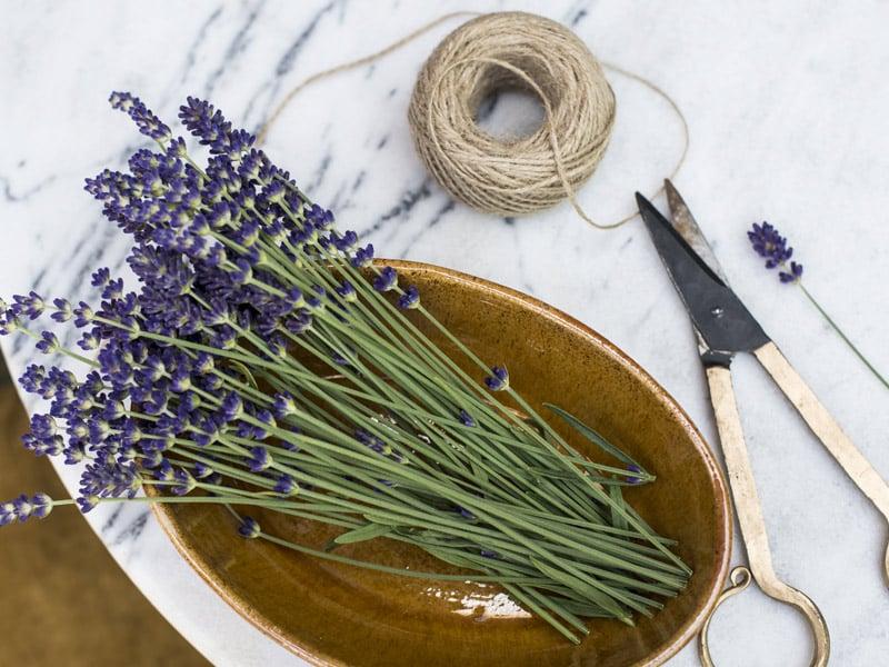 floriss-lavendel-fat.jpg