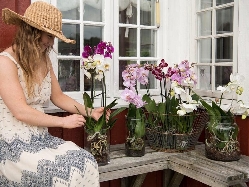 floriss-phalaenopsis-kurv-glasskrukker-marianne.jpg