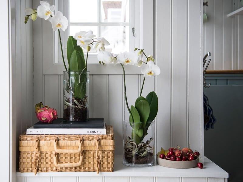 floriss-phalaenopsis-vase-glassvase-krukke-glasskrukke.jpg