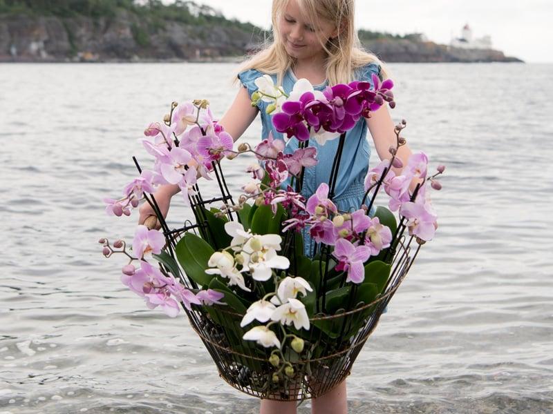 floriss-phalaenopsis-kurv-strand-pernille.jpg