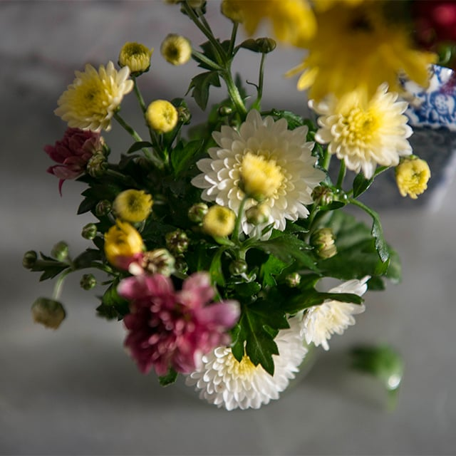 chrysantemum-2.jpg