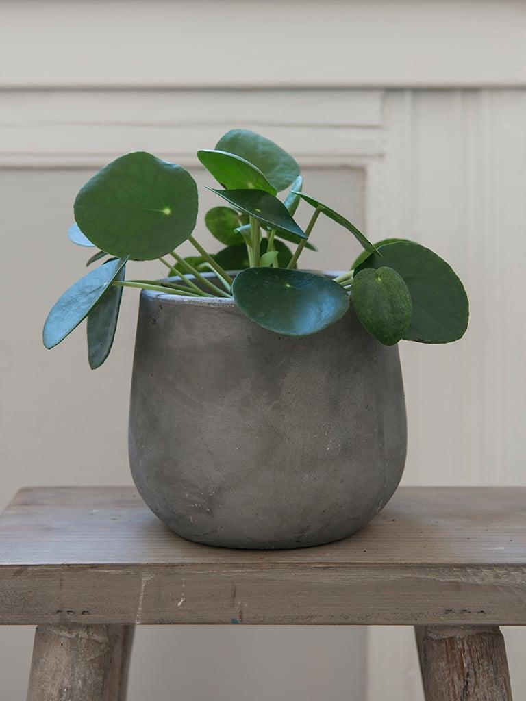 gronne-planter-II-DSC2252.jpg