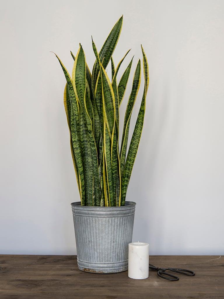 gronne-planter-III-DSC2281.jpg